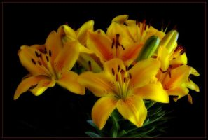 YELLOW LILLIES 3 by THOM-B-FOTO