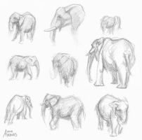 Elephant Sketches by socktail