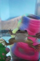 The Frog- 1 by Tylon