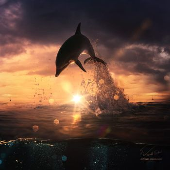 Beautiful-sunset-dolphin-jumping-from-ocean by Vitaly-Sokol