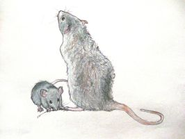 Ratties by forgottenones
