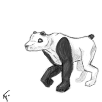 Panda Bear Dog by Raxona
