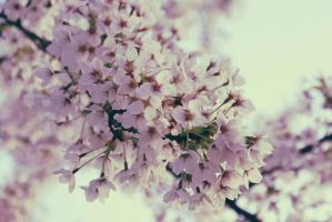 Blossom by electrogrunge