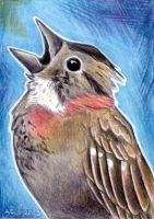 Rofous-collared Sparrow ACEO by Kqeina