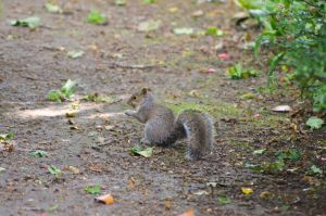 Squirrel 3 by Missmith91