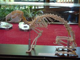 Rabbit Skeleton Bones by FantasyStock