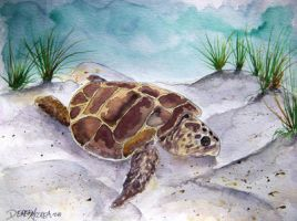 sea turtle 2 by derekmccrea