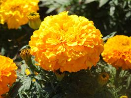 Gold Flower by Clangston