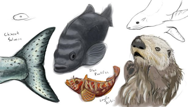 Sea critter studies by Kydnt