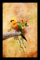 Parrot by SheepyLife
