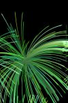 Green Fireworks by Jane2Audron
