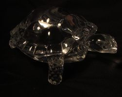 Crystal Tortoise Stock by DemoncherryStock