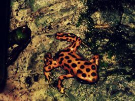 Poisoness Frog by audreyhepburnluv97