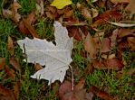 White Leaf Painting by archaeobibliologist
