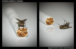 Smoking Fly... by ocdfx