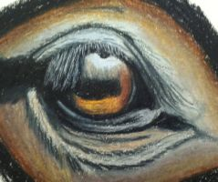 Equine eye practice - colored pencil by AGriffey