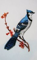 Blue Jay by Stand-Out1919