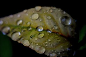 Droplets by elijahvivio1996