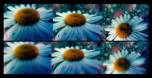 3d flowers by euqnic