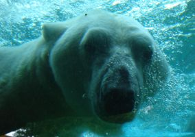 Underwater Polar Bear by LT-Arts