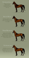 Moscovian Sport Horse special markings by BH-Stables