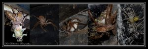 Huntsman spider with babies by Purple-Dragonfly-Art