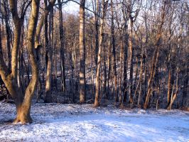 The Border of the Wintry Woods by ScottEquus91