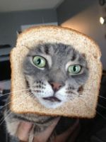 Bread Cat by Voicepotography