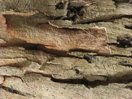 Cracked Bark 1 by CharadeTextures