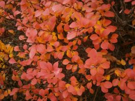 Colors of the Autumn by Lola22