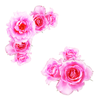 bright pink roses png by Melissa-tm