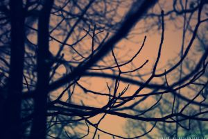 Through the Trees II by lonepalms