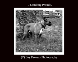 .:Standing Proud:. by DayDreamsPhotography