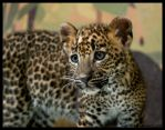 spotted kitty by morho