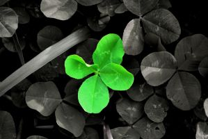 four leaf clover by Staticpictures