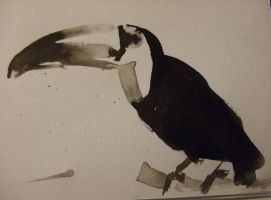 Toucan by Izzy-T