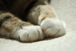 Little Paws by lafhaha