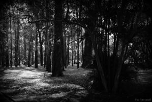 .Songs from the woods by Zphi