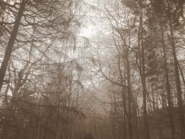 Winter Woodland Untitled 2 by Carrie-AnneSevenfold