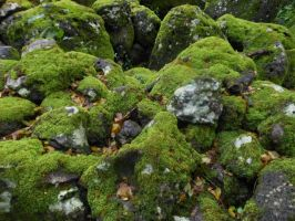 Waimea Valley Moss Rocks by K-ayu