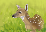 fawn by Gshep