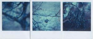 wintry blues by catartica