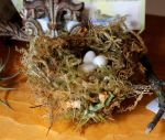 Replica bird eggs and nests FS by lupagreenwolf
