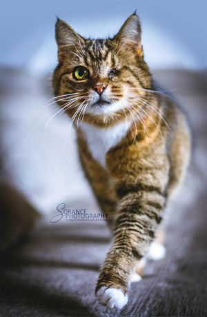 Mietzie the one-eyed cat. by Sorance