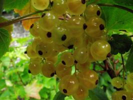 White Currants by D1scipl31974