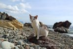 cat with jasper beach by Mari-Ghostly