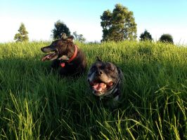 2 Puppas in the grass by psion005