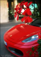 Scuderia's Flowers by Dhante
