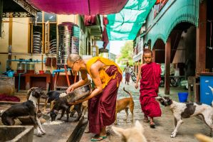 Feeding the Dogs, Mandalay Monastery by little-spacey
