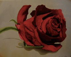 rose by RedBreed
